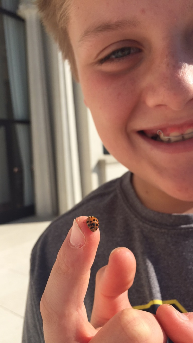 Liam's caring nature helps him make friends with all - even ladybugs.