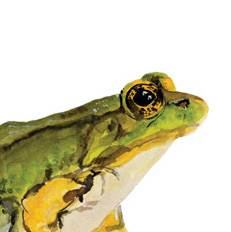 National Audubon Society Redesign