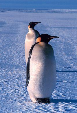 266px-Emperor_penguin.jpg