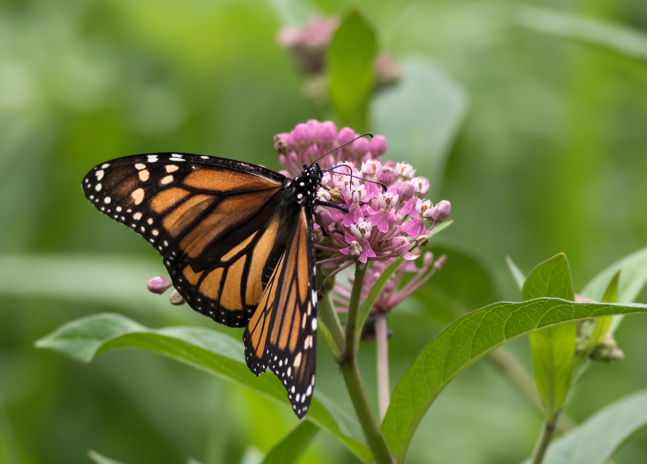 Pollinator Workshop Press Release Image 1.jpeg