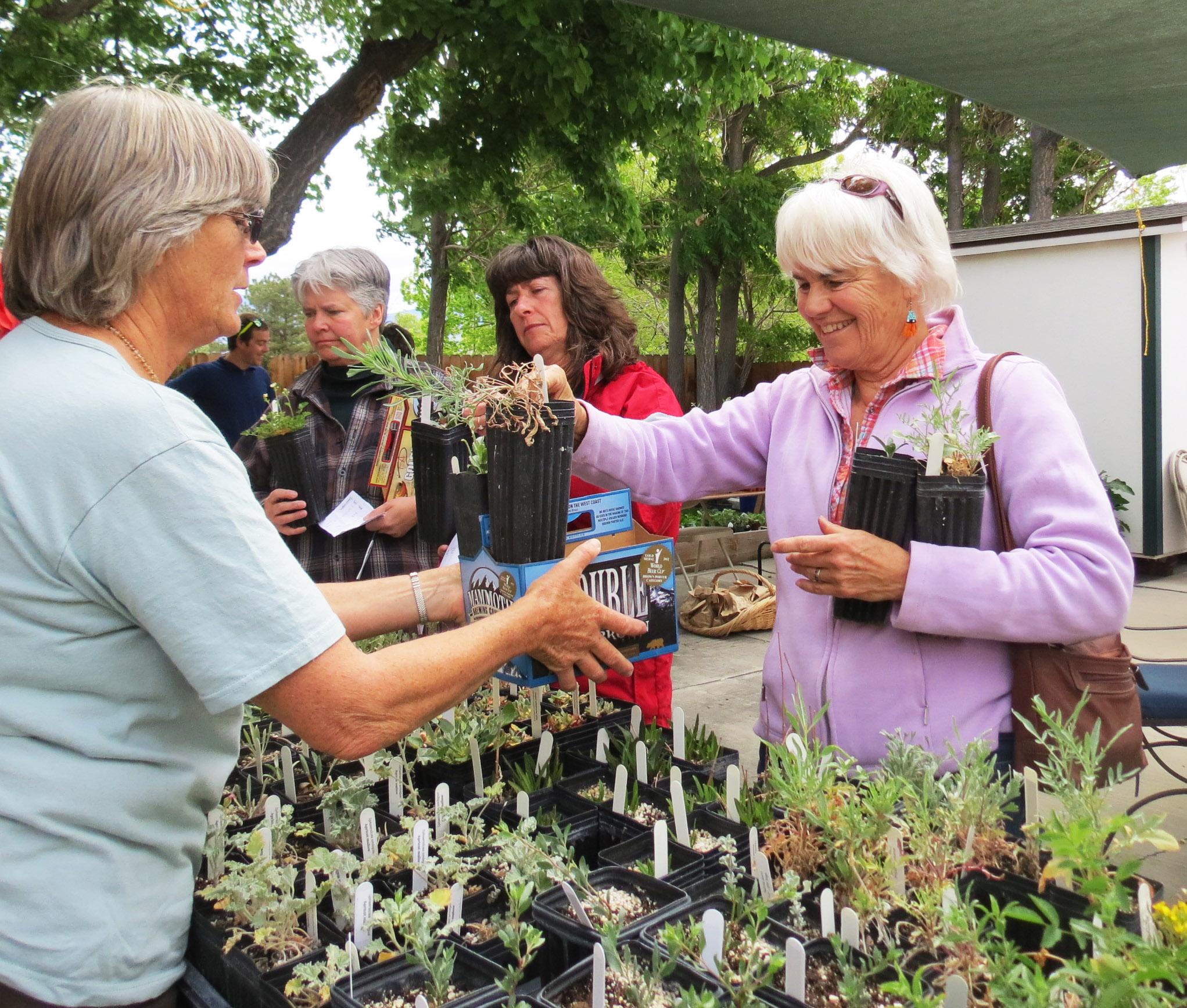 GardenFest Image 2.jpg