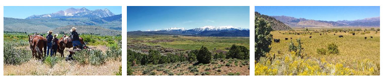 (Left-Right) 1. The Sceirine family has run a successful ranching business for three generations. 2. This conservation easement rests in an emerald valley crowned by the peaks of Yosemite National Park. 3. Grazing cattle on Sceirine Point Ranch