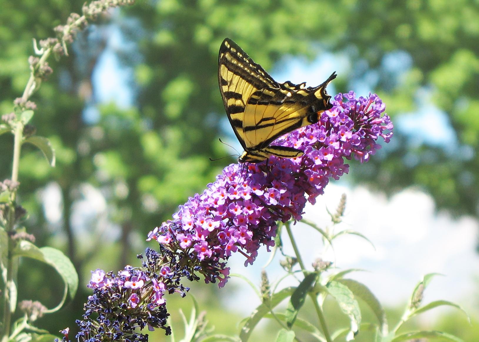 Butterfly in garden (1).jpg