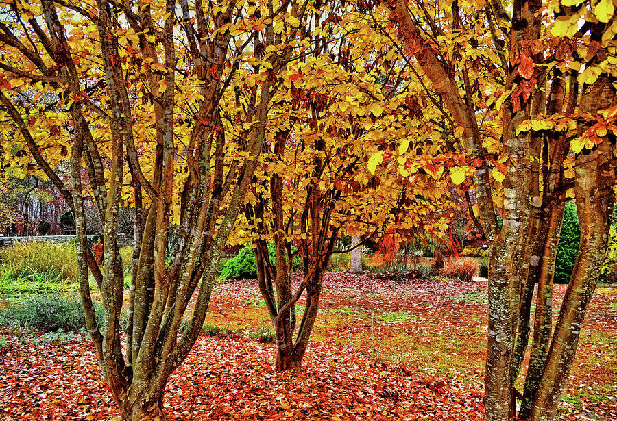fall-colors-a-walk-in-the-park-002-george-bostian.jpg