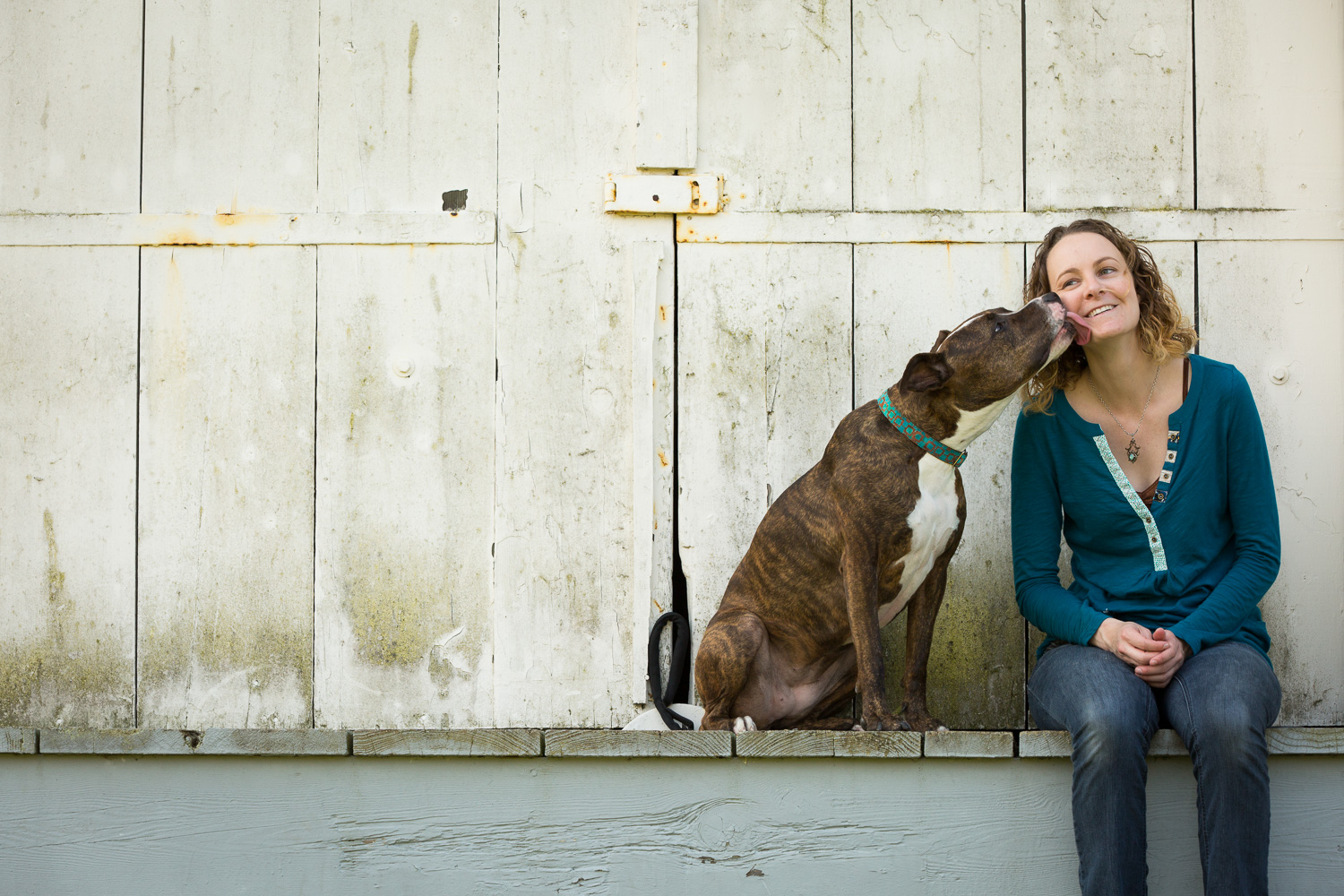 Seattle Pet Photography_Pit Bull