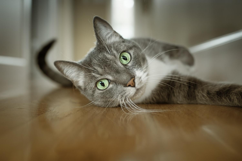 Seattle Pet Photography_Cat
