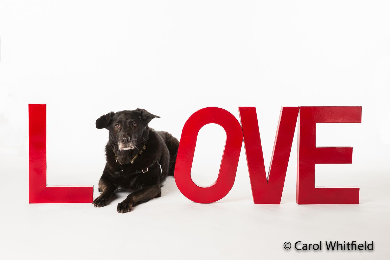 Studio Photography_senior dog