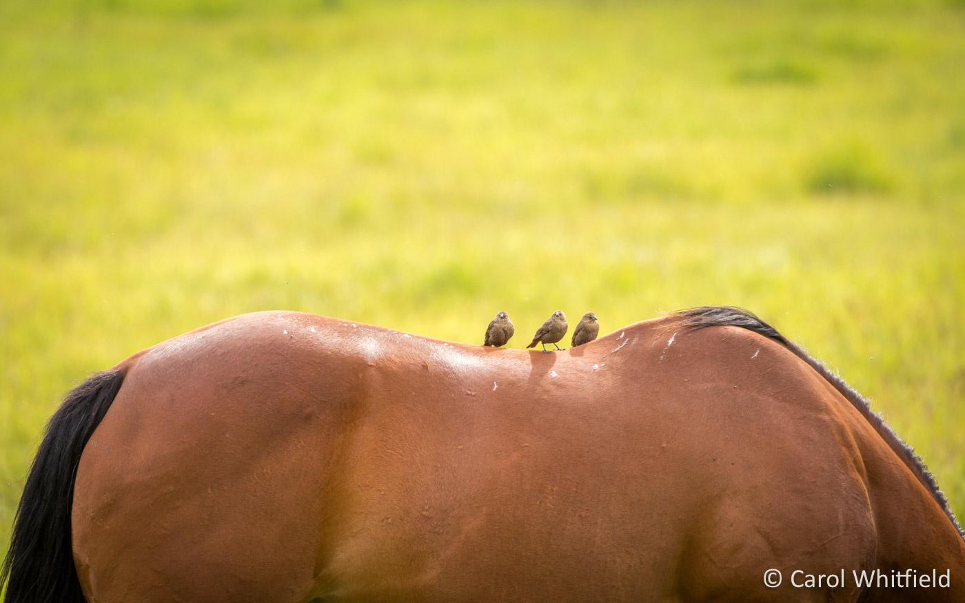 Seattle Pet Photography_horses