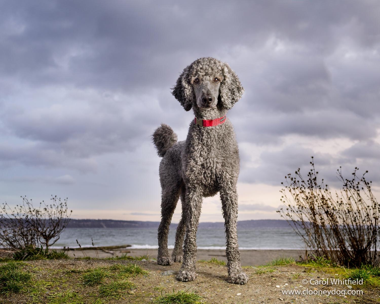 Double Bluff Dog Beach