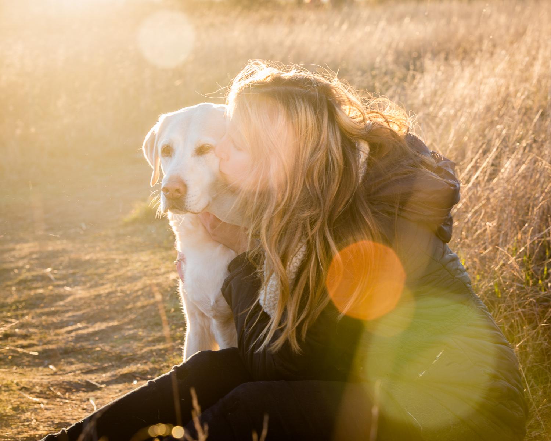 Seattle Pet Photography_Yellow Lab