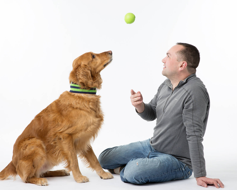 Seattle Pet Photography_golden retriever