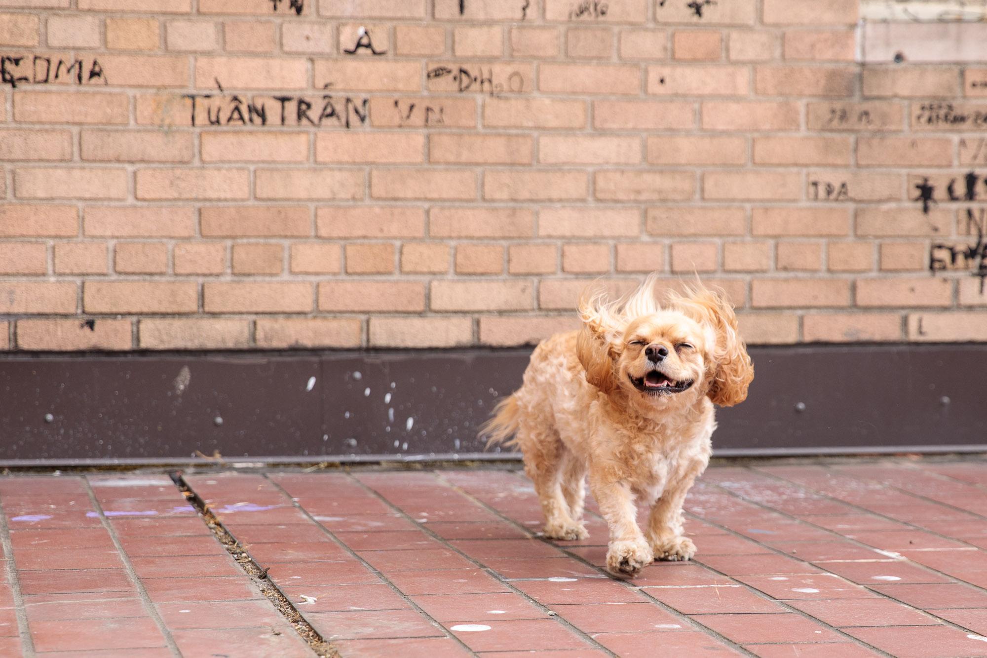 Seattle Pet Photography_dog