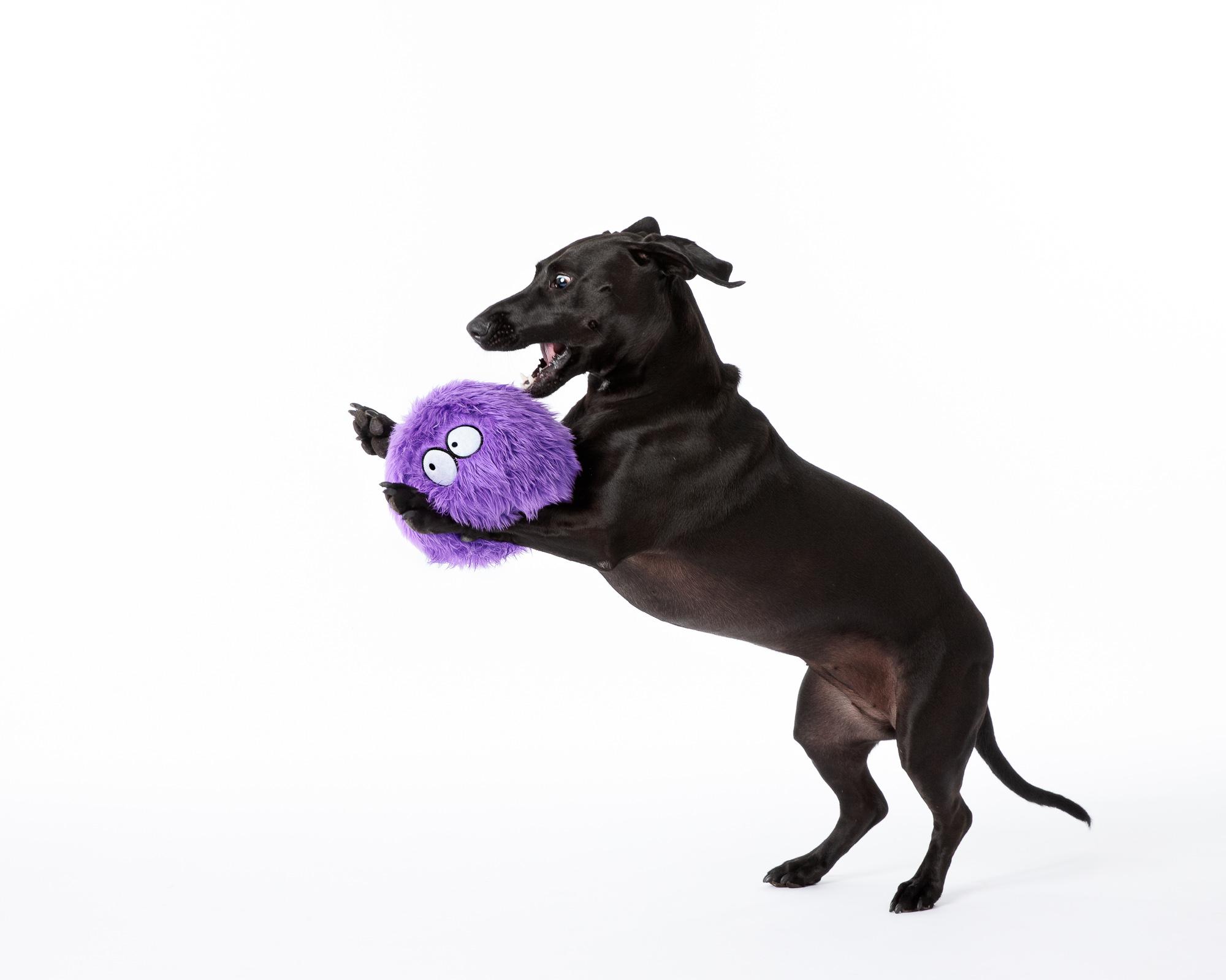 Pet Photography_daschund