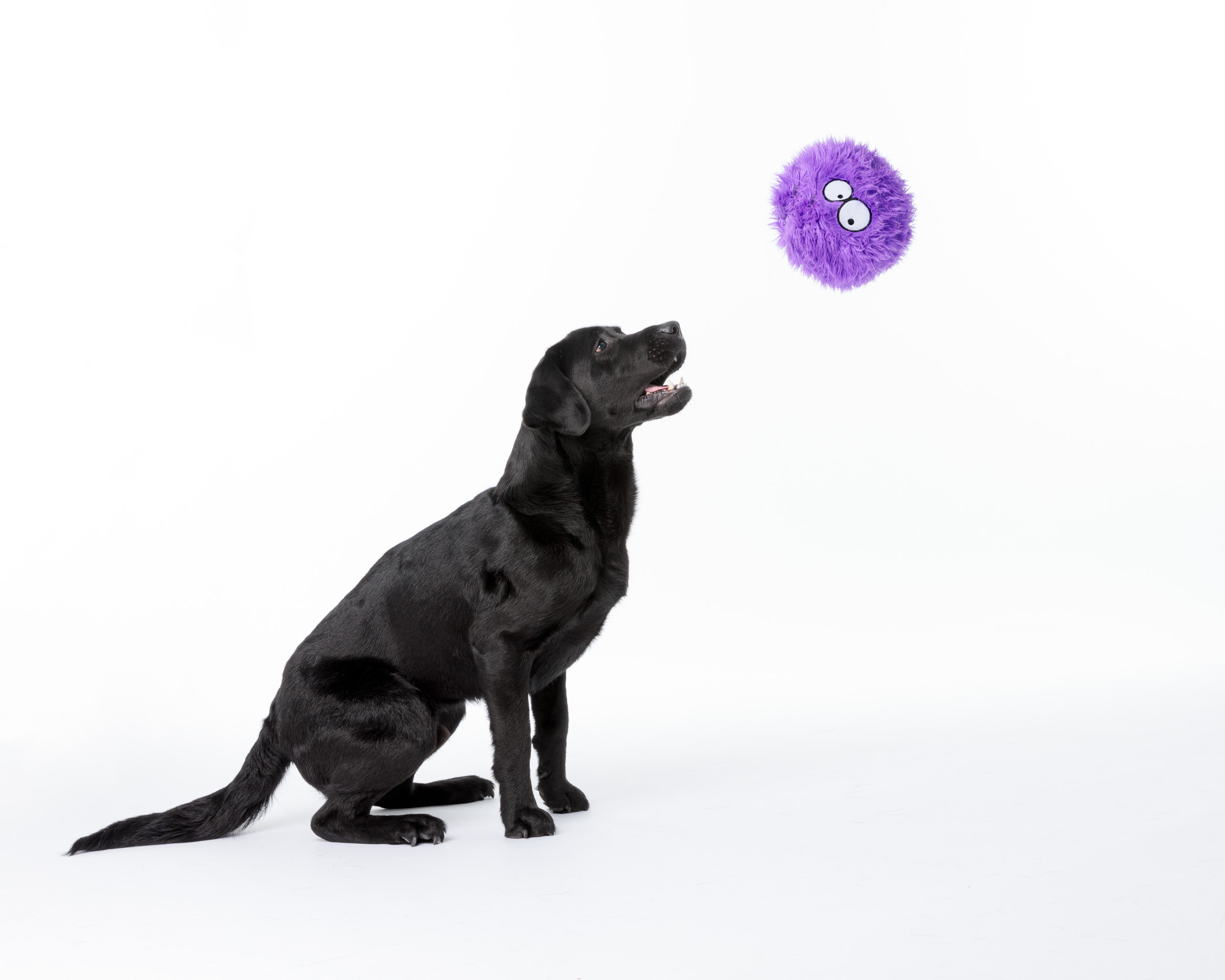 Pet Phoptography_lab