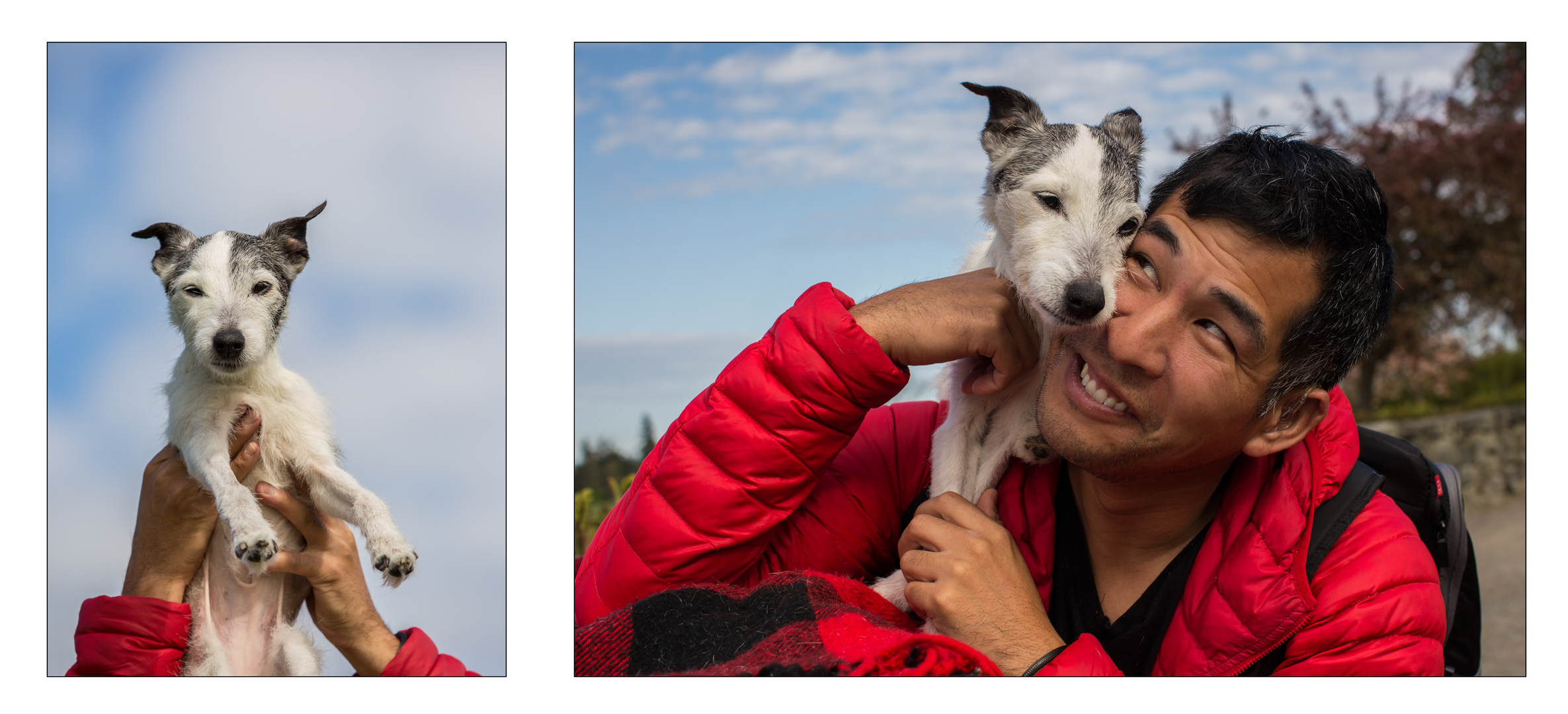 Jack Russel Terrier_Seattle Pet Photography