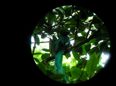 Photo of a Quetzal taken through a spotting scope