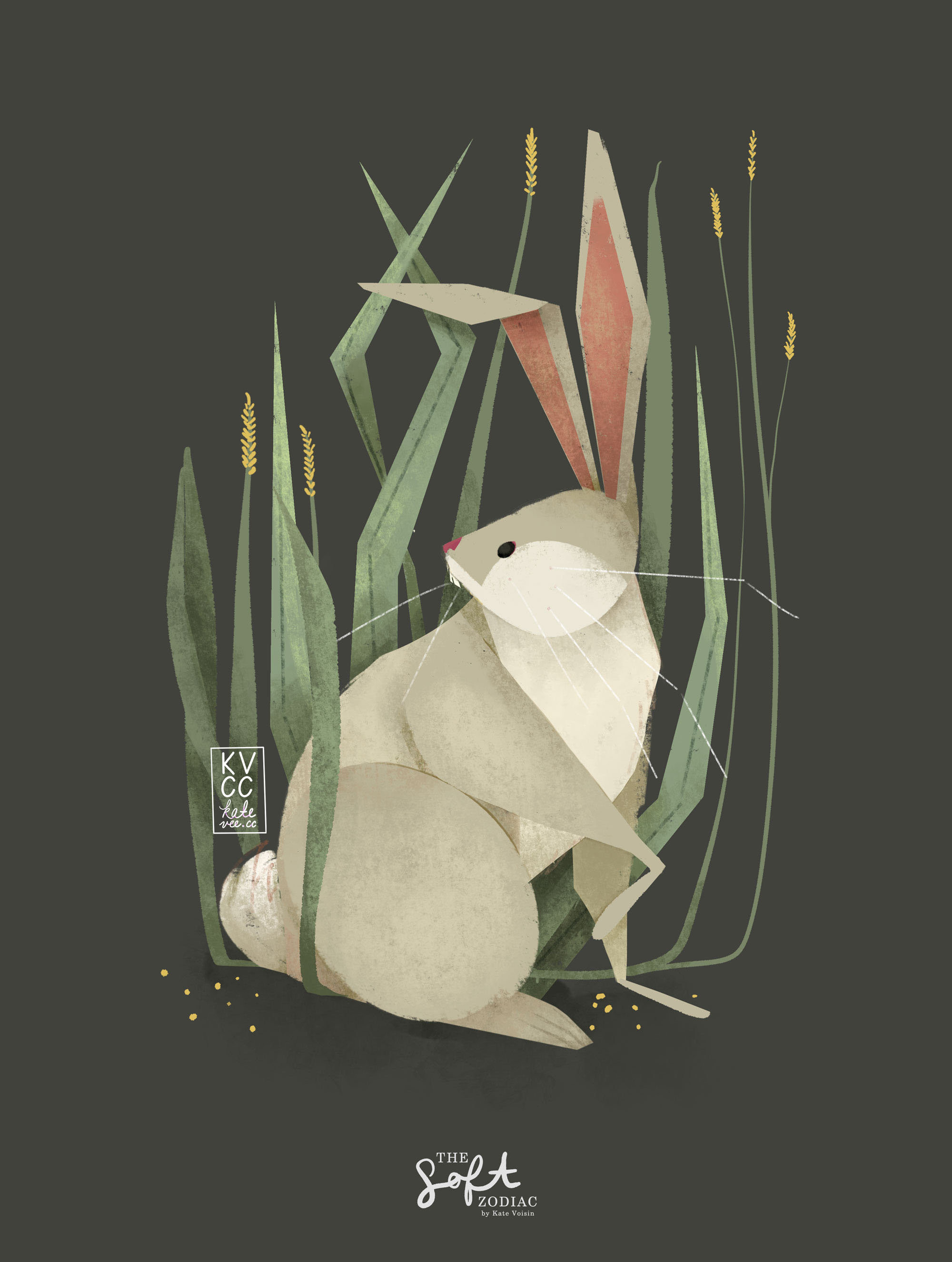kvcc_rabbit.jpg
