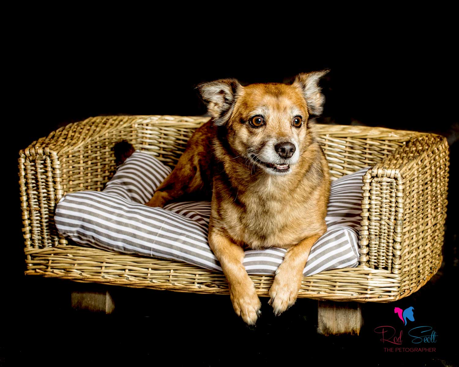 Rod scott pet photography