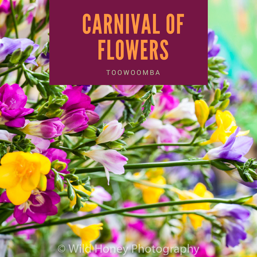 Carnival of Flowers Photography Tour_20160917-_MG_7377.jpg