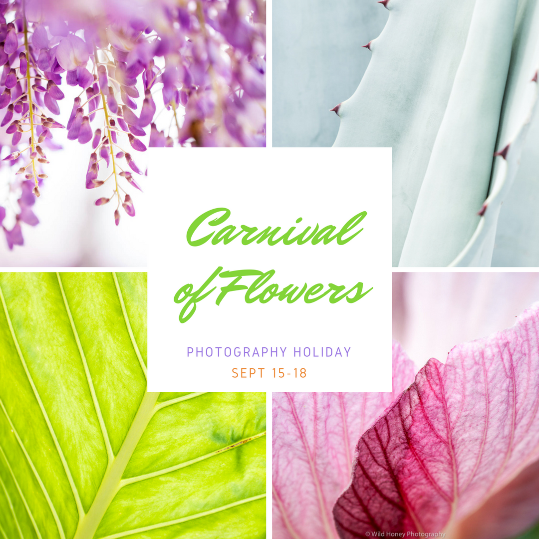 Toowoomba Carnival of Flowers Photography