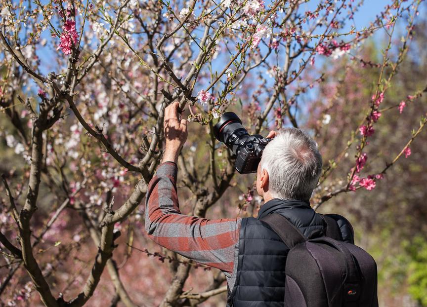 TulipTops-Flower Photography