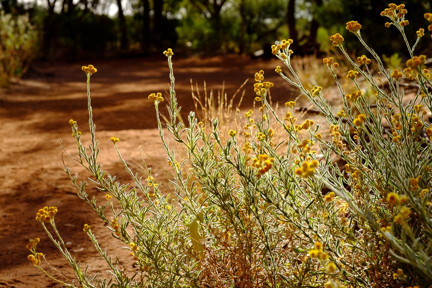 Uluru-6904.jpg