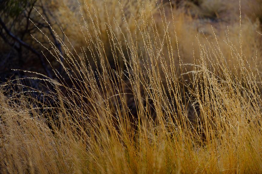Uluru-6930.jpg