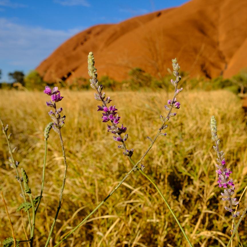 Uluru-6954.jpg