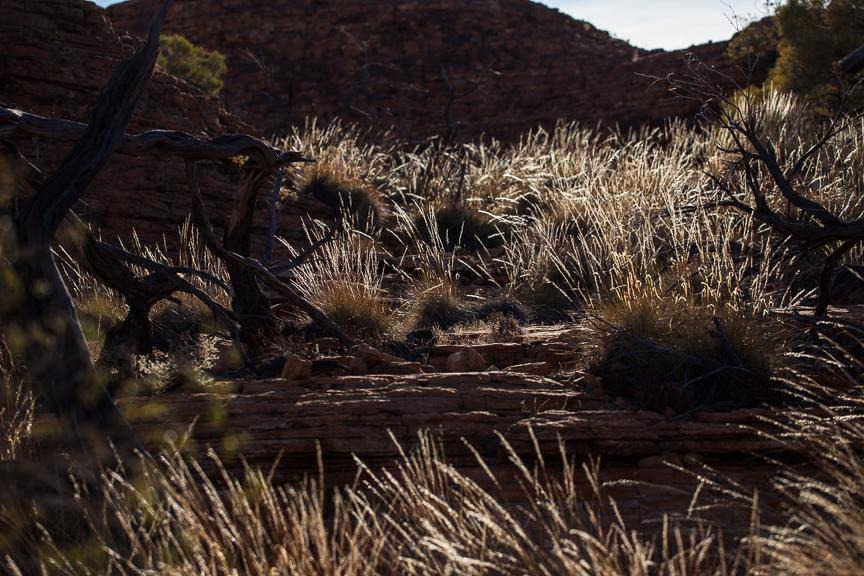Uluru-9756.jpg