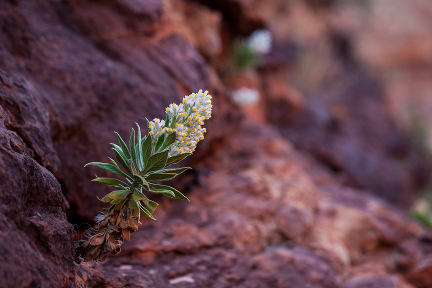 Uluru-9747.jpg