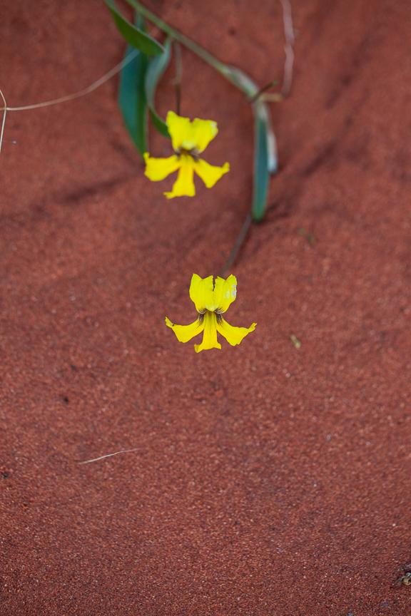 Uluru-9796.jpg