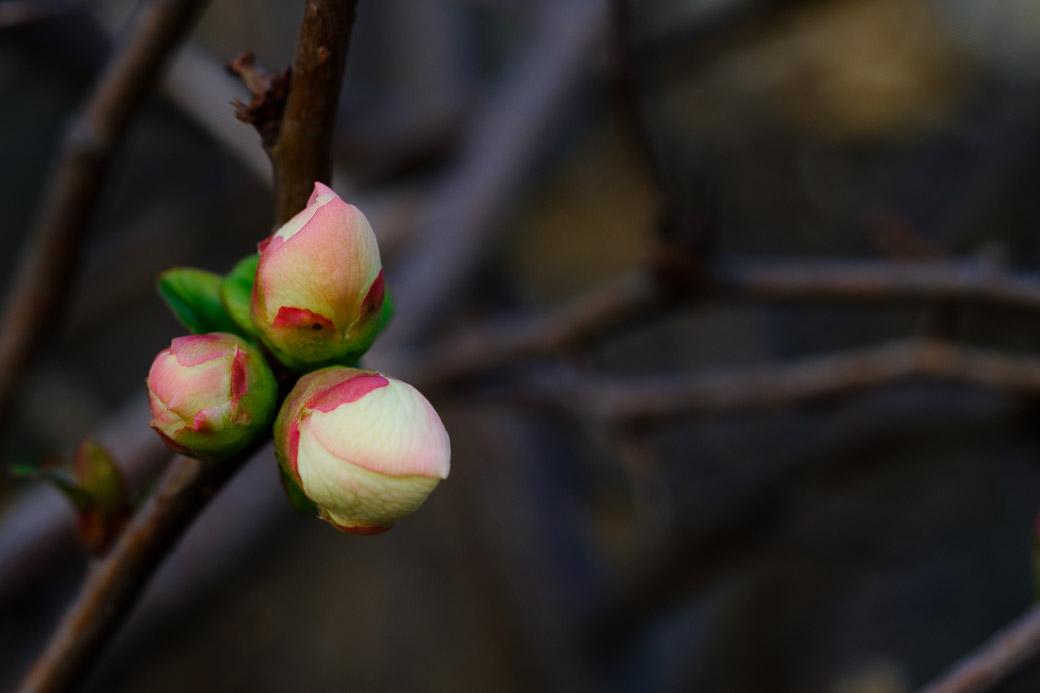 Amongst the bleak background, a tiny bud of life.