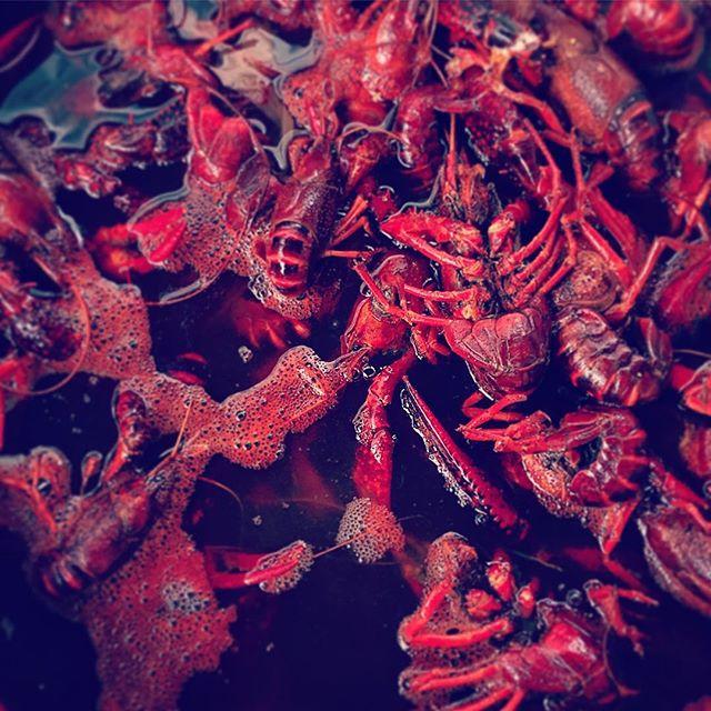 Crawfish - ready to be eaten