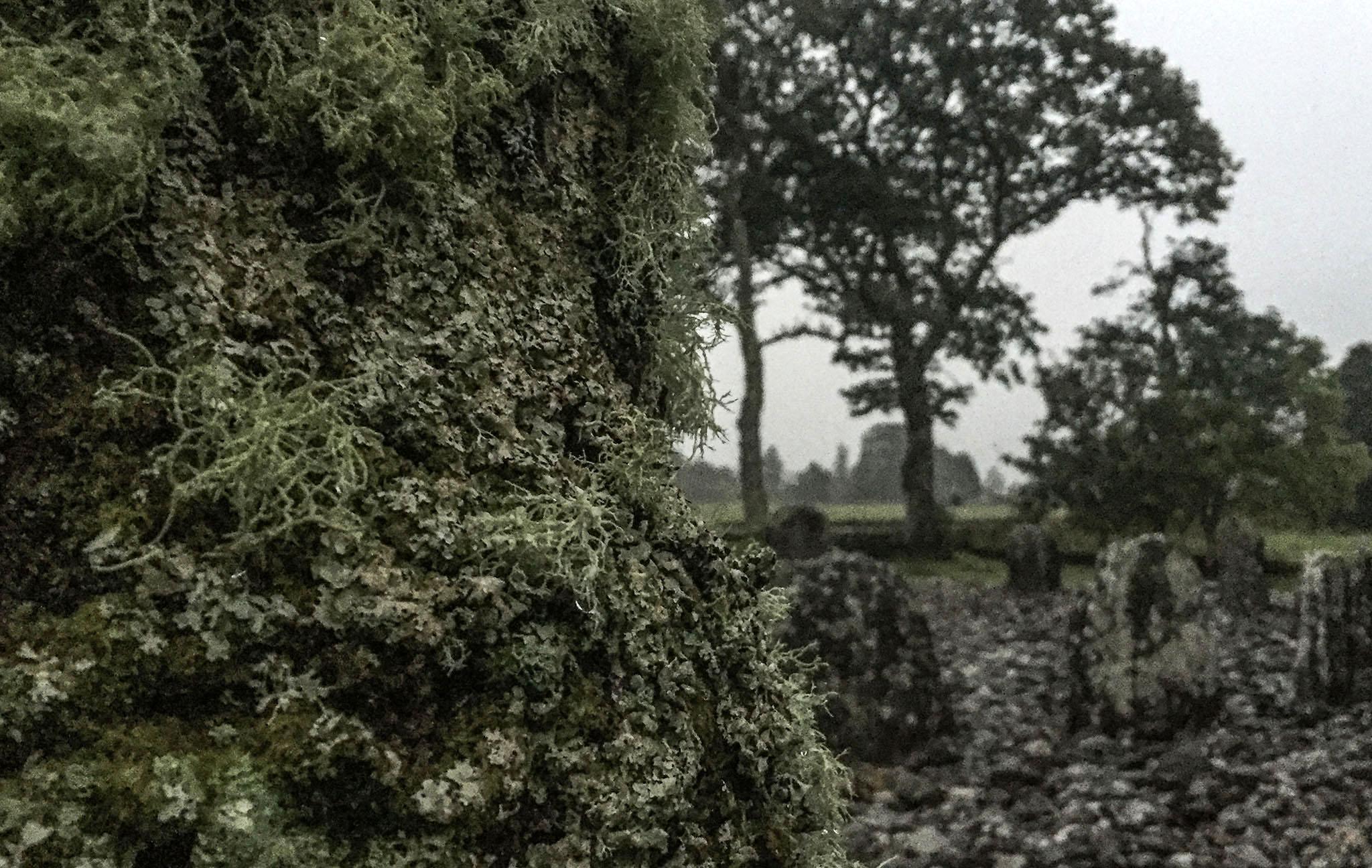 Temple Wood Kilmartin 0674.jpg