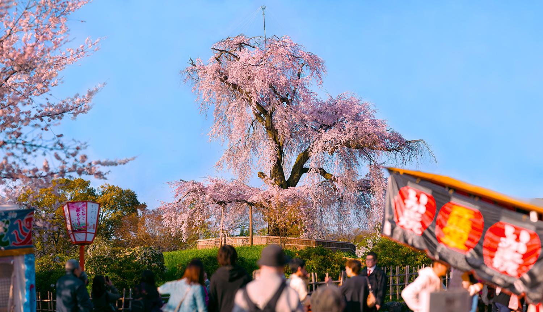 円山公園%22.jpg