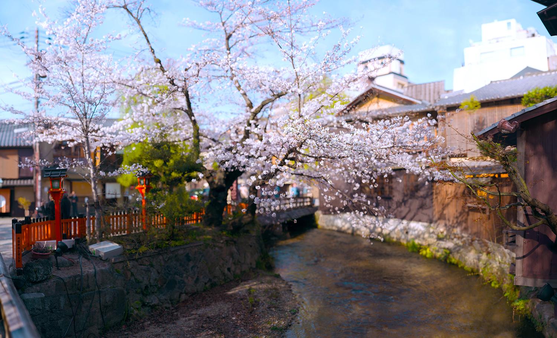 祇園白川1%22.jpg