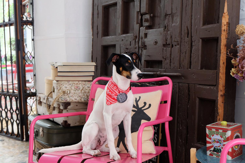 Hotel-Casa-de-Huespedes-Santa-Maria-petfriendly-Berta-4.jpg