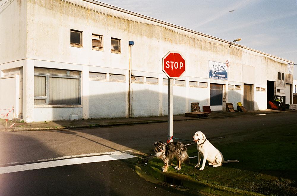 2-ISA_DOGS_POLE.jpg