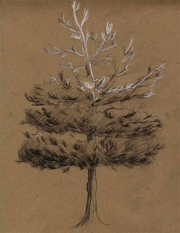 tree1_b.jpg
