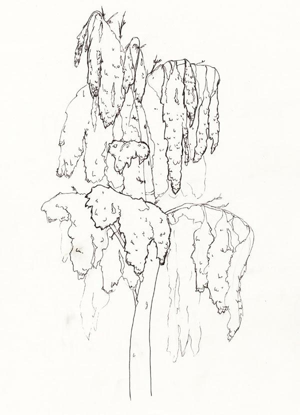 tree3_b.jpg