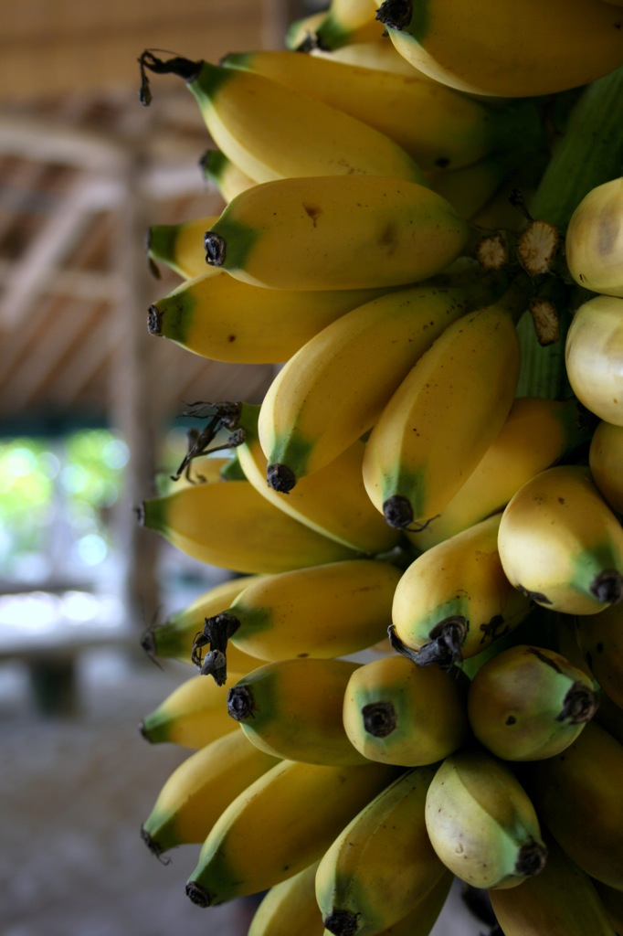 You can also try climbing on the banana trees for a treat