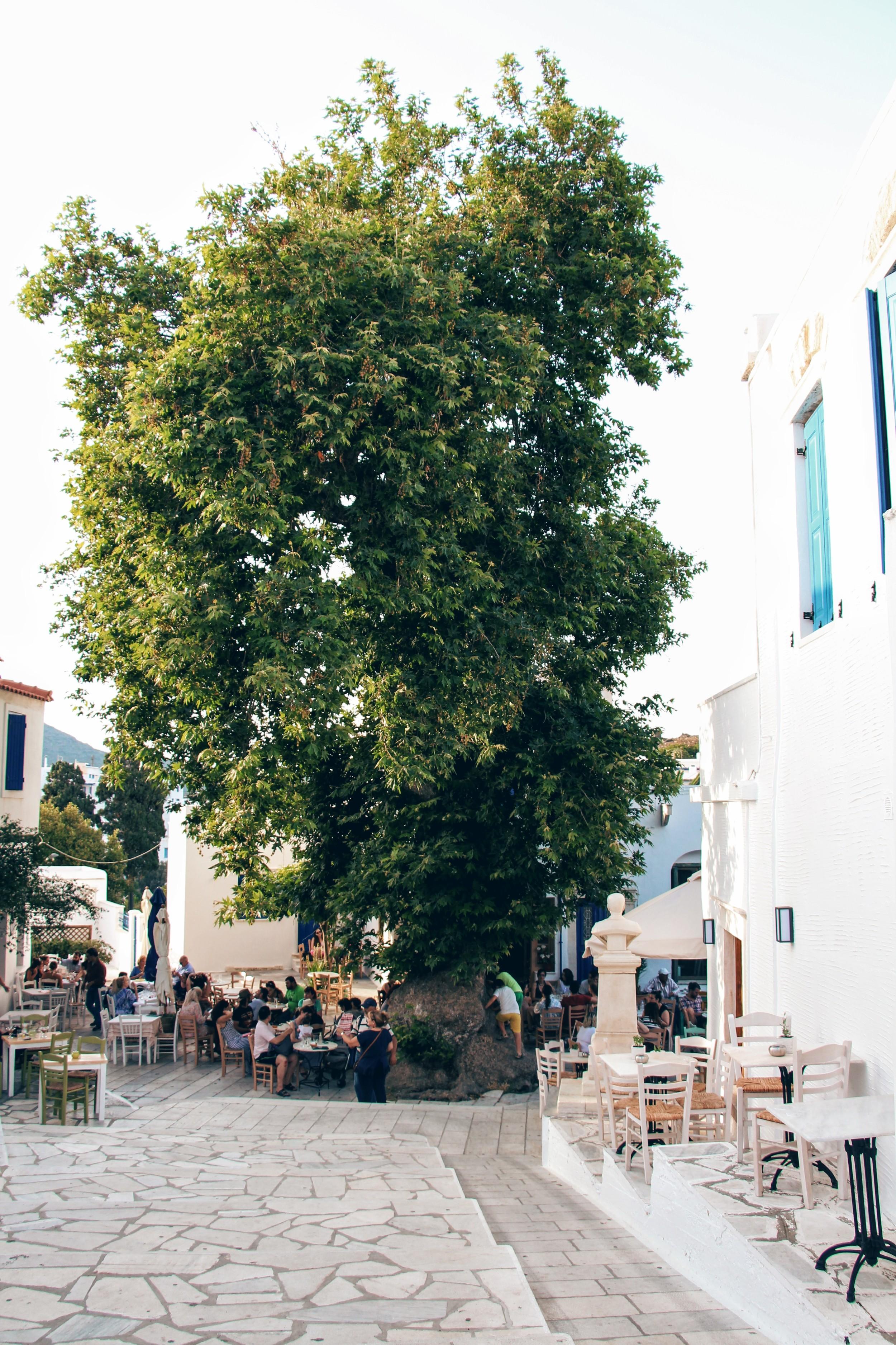 Tinos - Jun 2016 - 20160618 3356.jpg