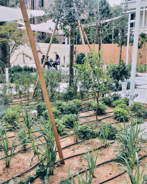 antwork garden.jpg