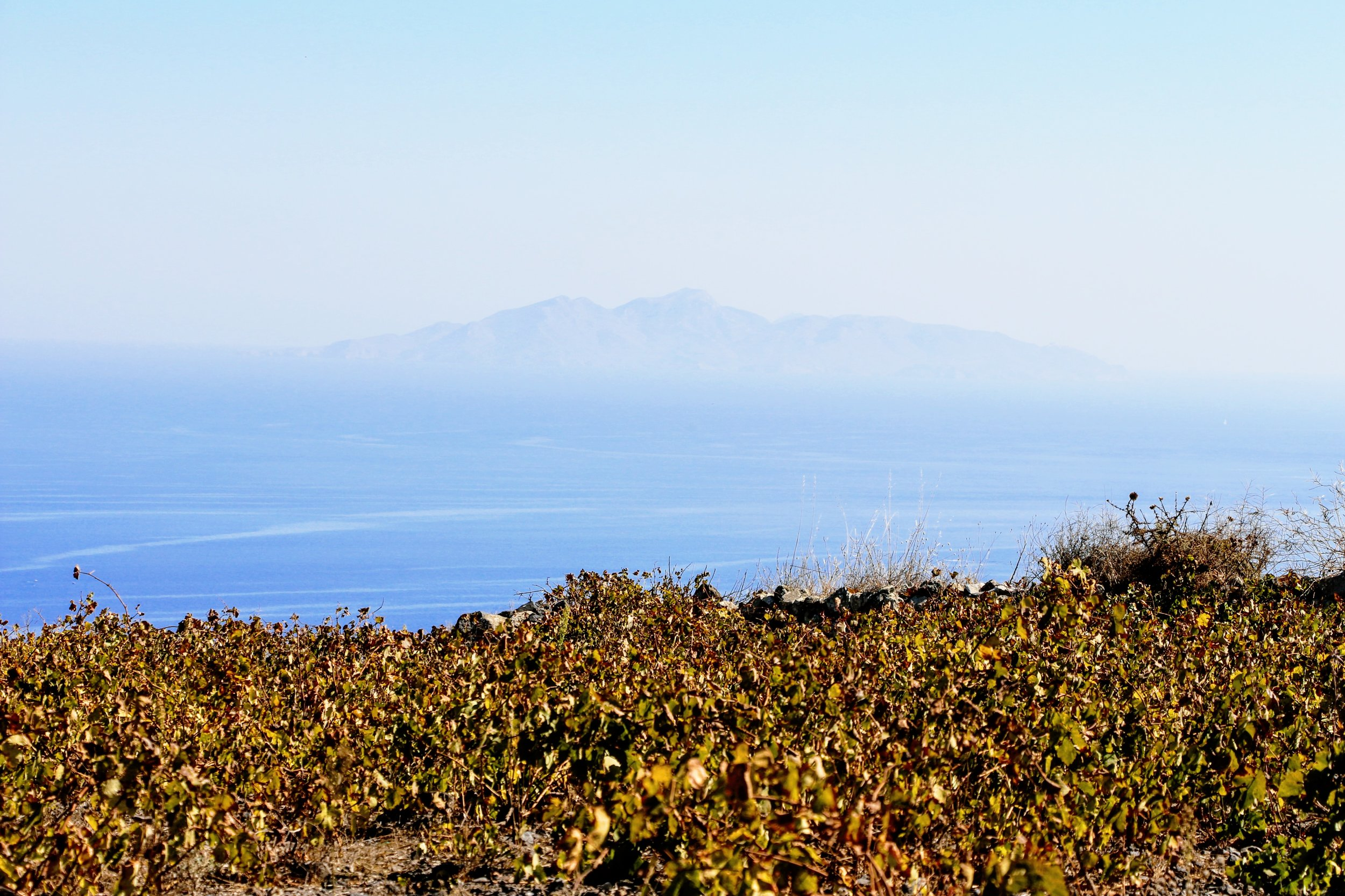Throughout the island of Santorini, there is an estimated 1400 hectares of vineyards still under cultivation