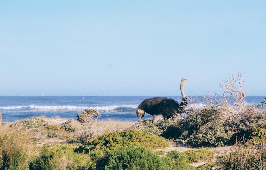 Enjoy the view, and make some new friends at the Cape Peninsula