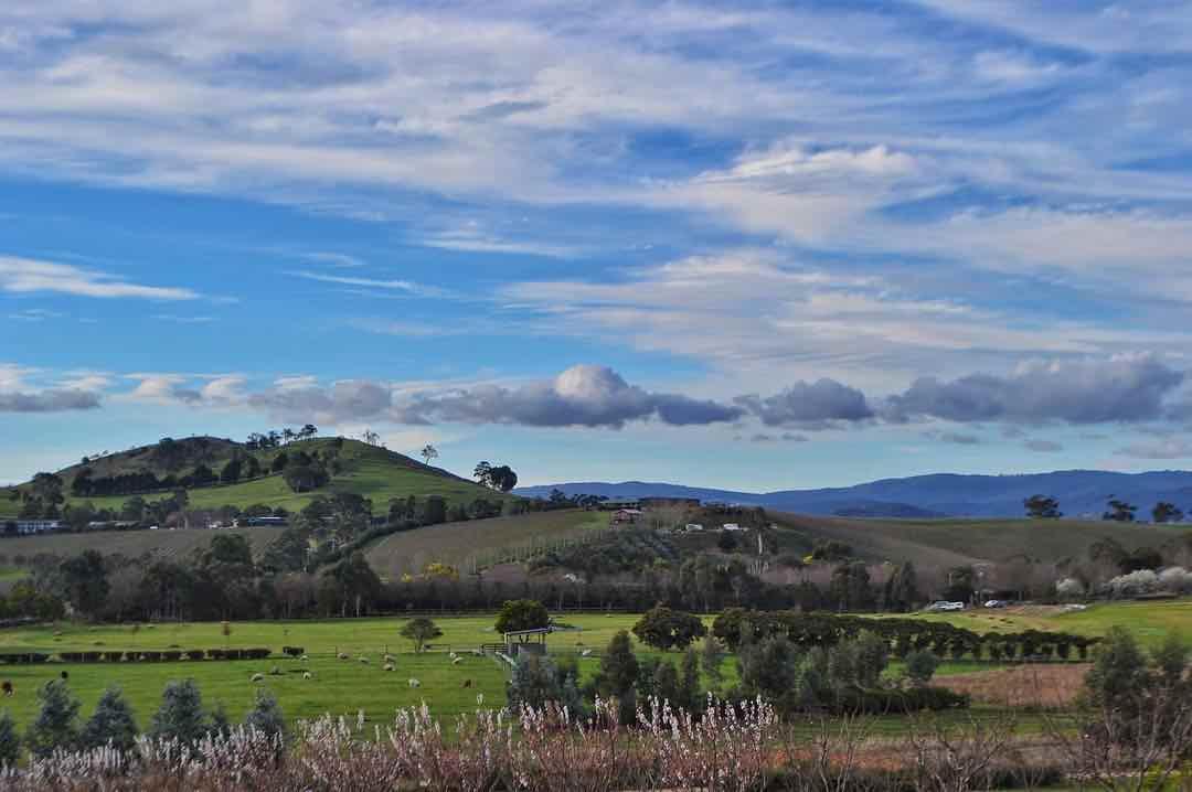 Yarra Valley 1.jpg