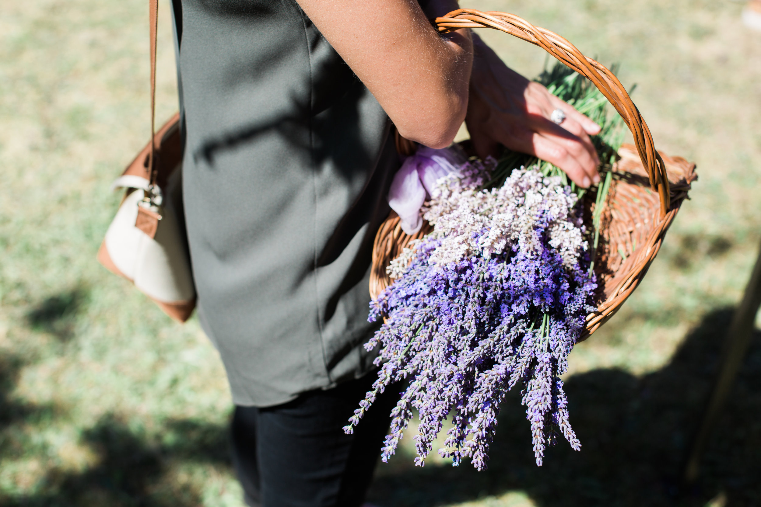 Went to my first lavender farm (and festival) and was in a blissful mellow heaven.