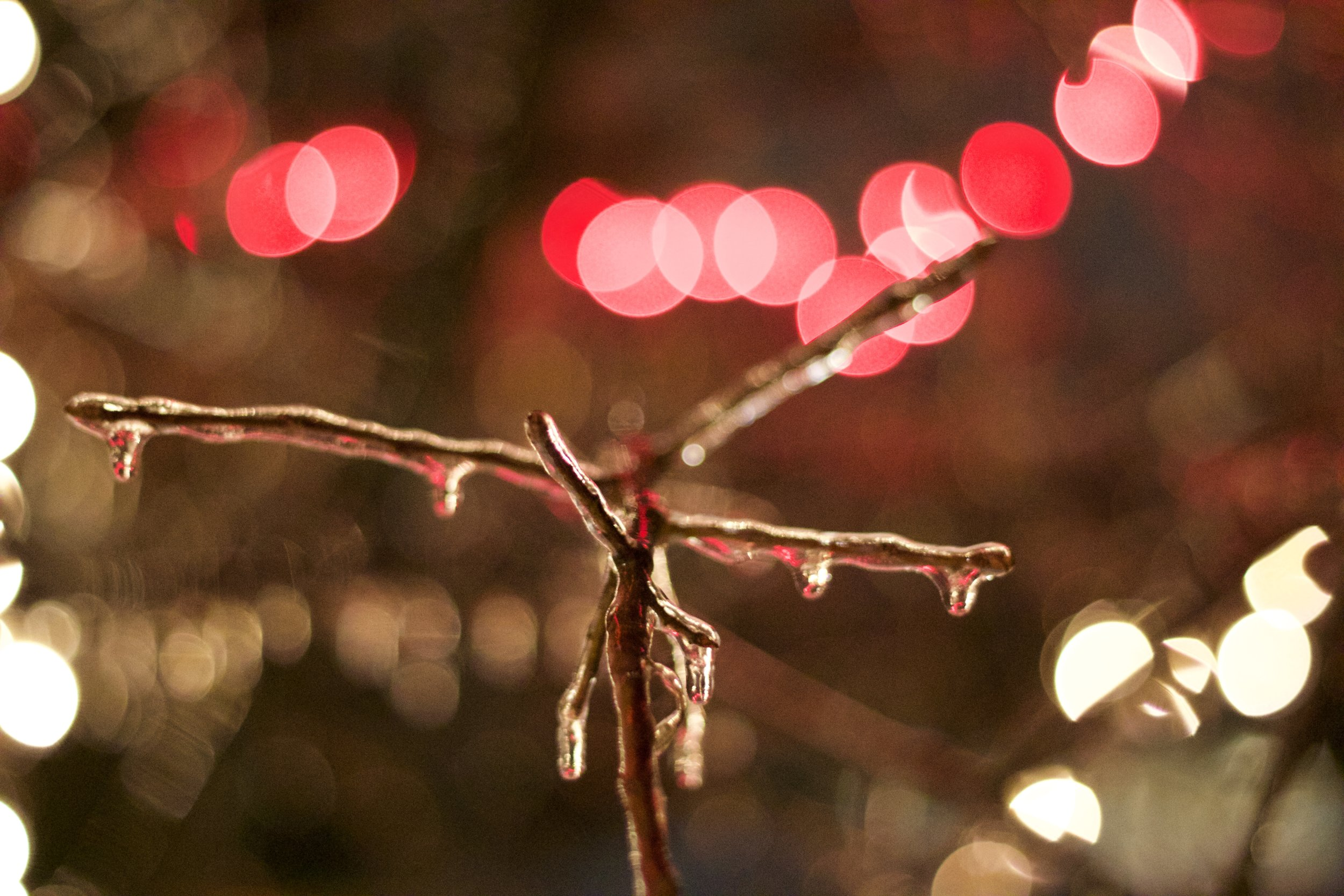 Here is a sample photo of mine, highlighting the outstanding low light performance, and ability to capture Bokeh with the 50mm  f 1.8  lens.