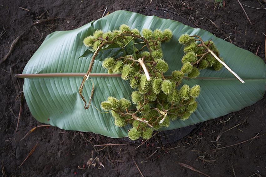 Plantain_LeafW.jpg