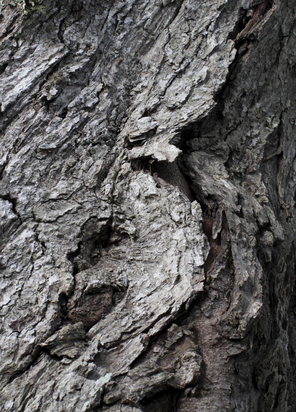 Wood + Leaves #8